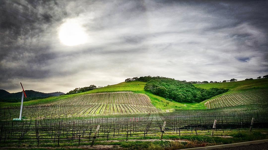 Oceano Wines in SLO Coast Wine region