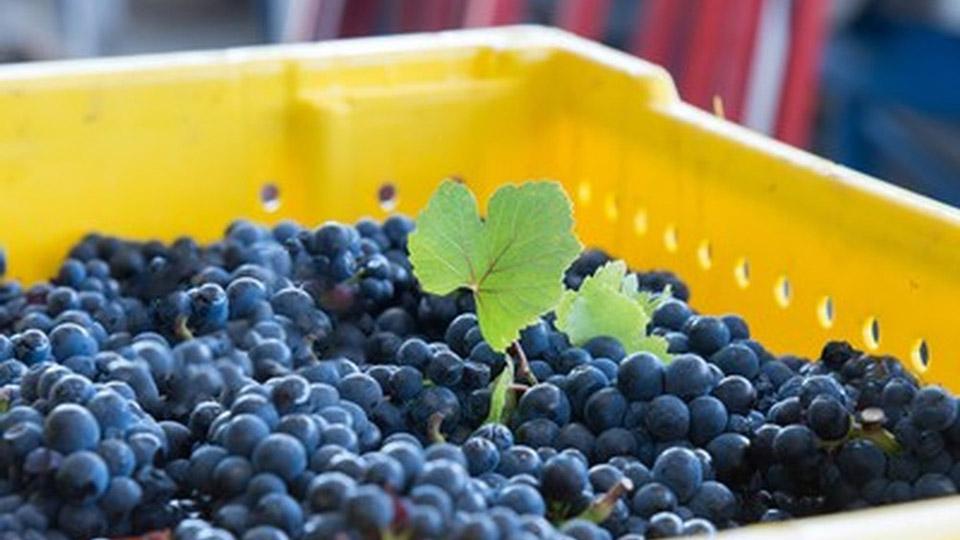 Tolosa Winery in SLO Coast Wine Region