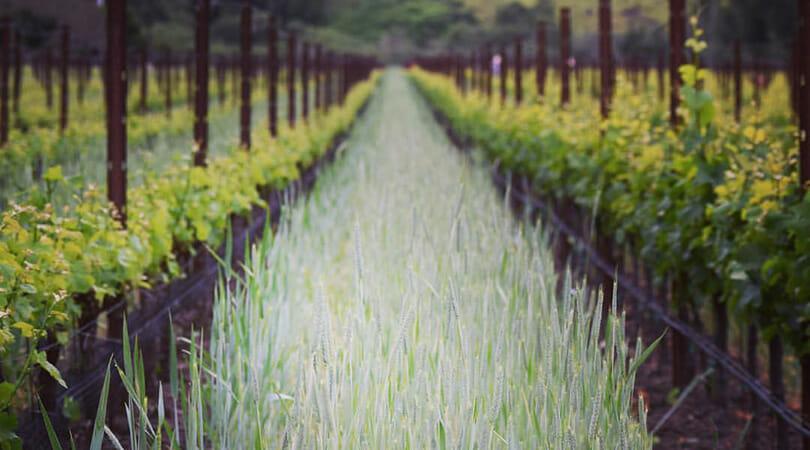 Stolo Vineyards Live Music in SLO Coast Wine region