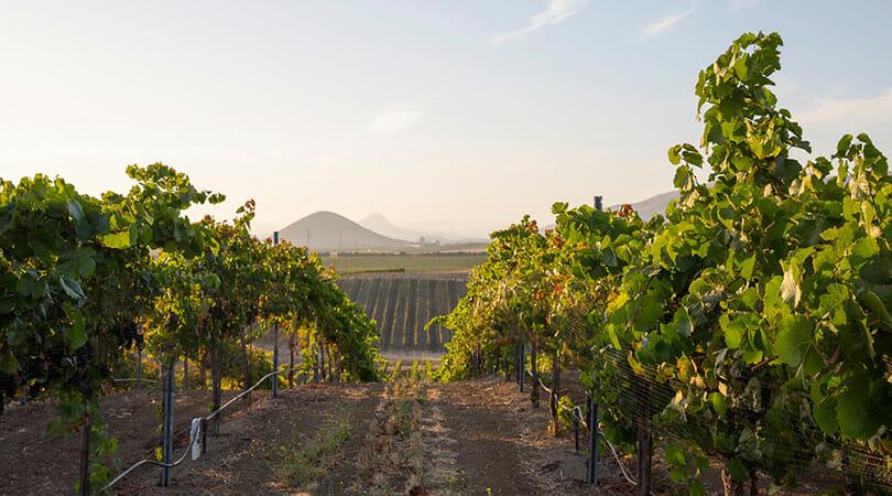 Wolff Vineyards Live Music in SLO Coast Wine region